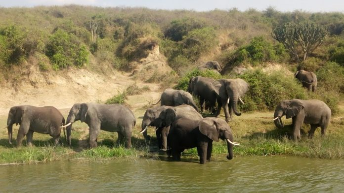 Have an Adventurous Vacation with a Tour to Africa