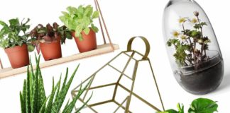 A few plants with health benefits: You must have at home