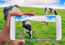 Scope Of Livestock Management Software
