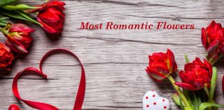 5 Most Romantic Flowers for Your Partner