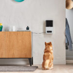 The Best Smart Home Gadgets for Your Pets